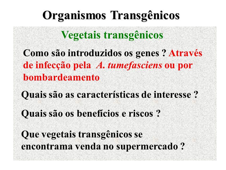 Organismos Transgênicos Vegetais transgênicos Como são introduzidos os genes ? Através de infecção pela A. tumefasciens ou por bombardeamento Quais sã