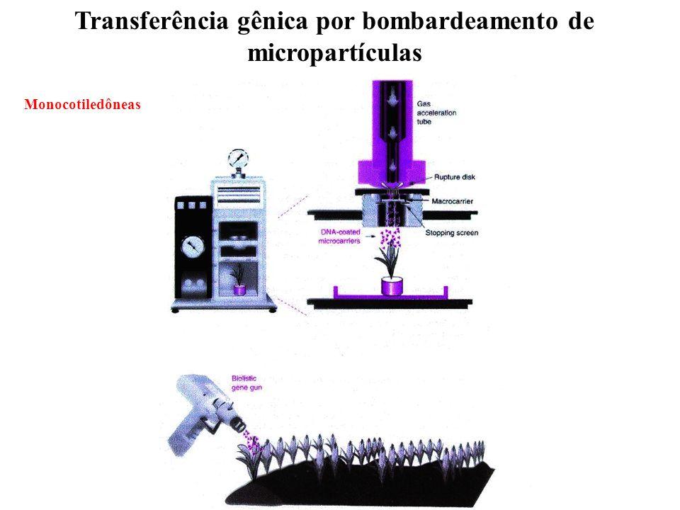 Transferência gênica por bombardeamento de micropartículas Monocotiledôneas