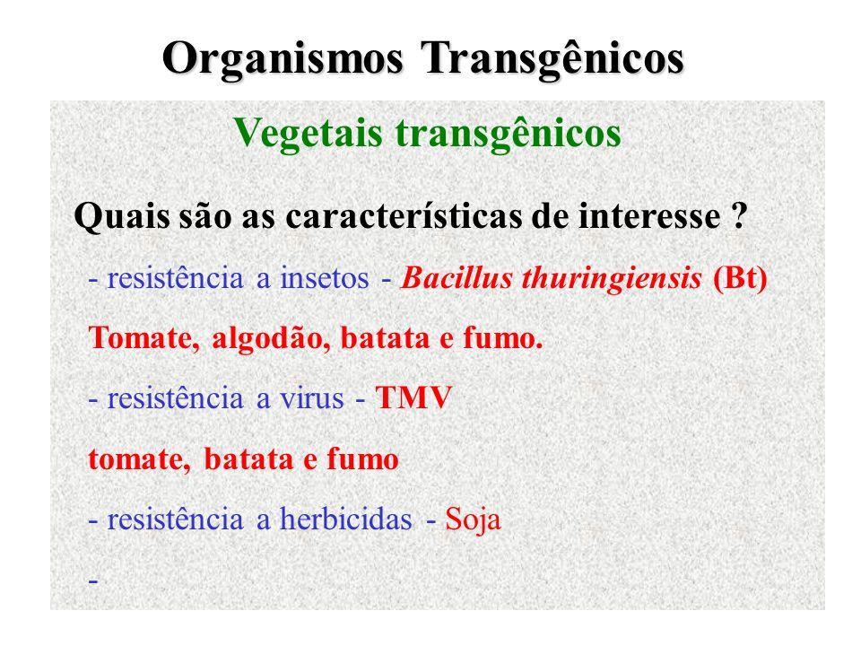 Organismos Transgênicos Vegetais transgênicos Quais são as características de interesse ? - resistência a insetos - Bacillus thuringiensis (Bt) Tomate