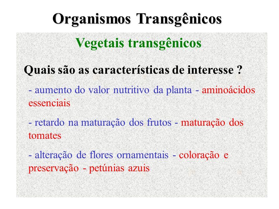 Organismos Transgênicos Vegetais transgênicos Quais são as características de interesse ? - aumento do valor nutritivo da planta - aminoácidos essenci