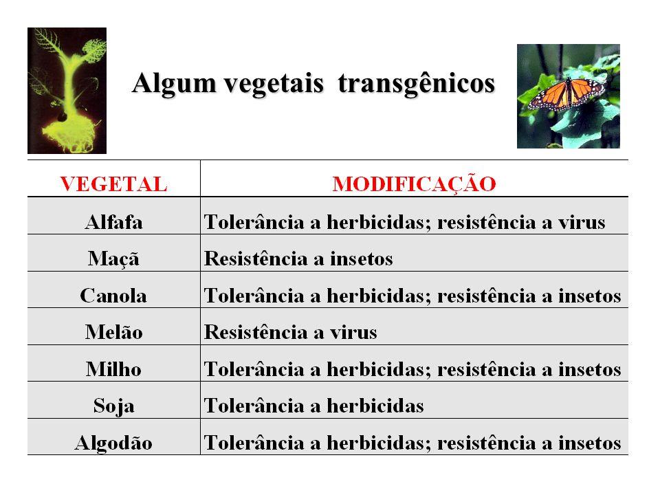 Algum vegetais transgênicos