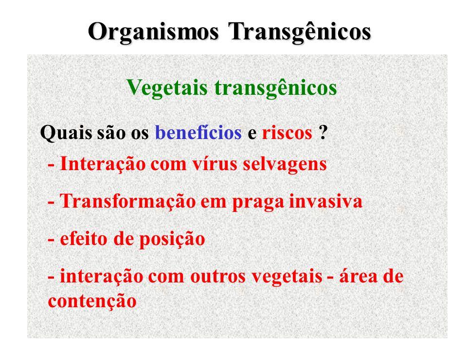 Organismos Transgênicos Vegetais transgênicos Quais são os benefícios e riscos ? - Interação com vírus selvagens - Transformação em praga invasiva - e