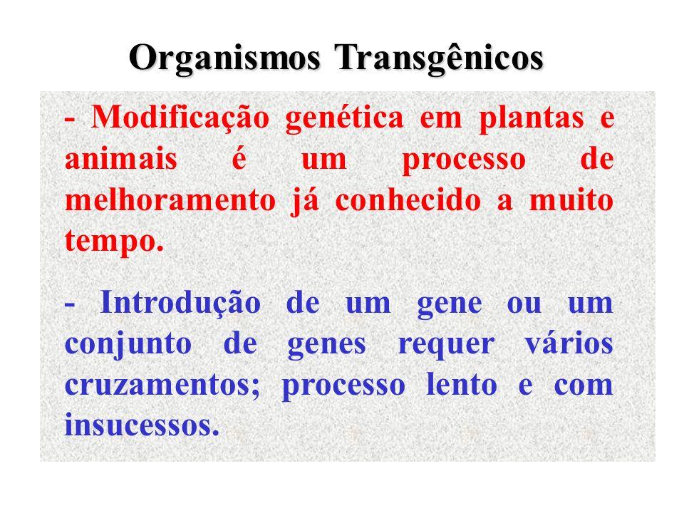- Modificação genética em plantas e animais é um processo de melhoramento já conhecido a muito tempo. - Introdução de um gene ou um conjunto de genes