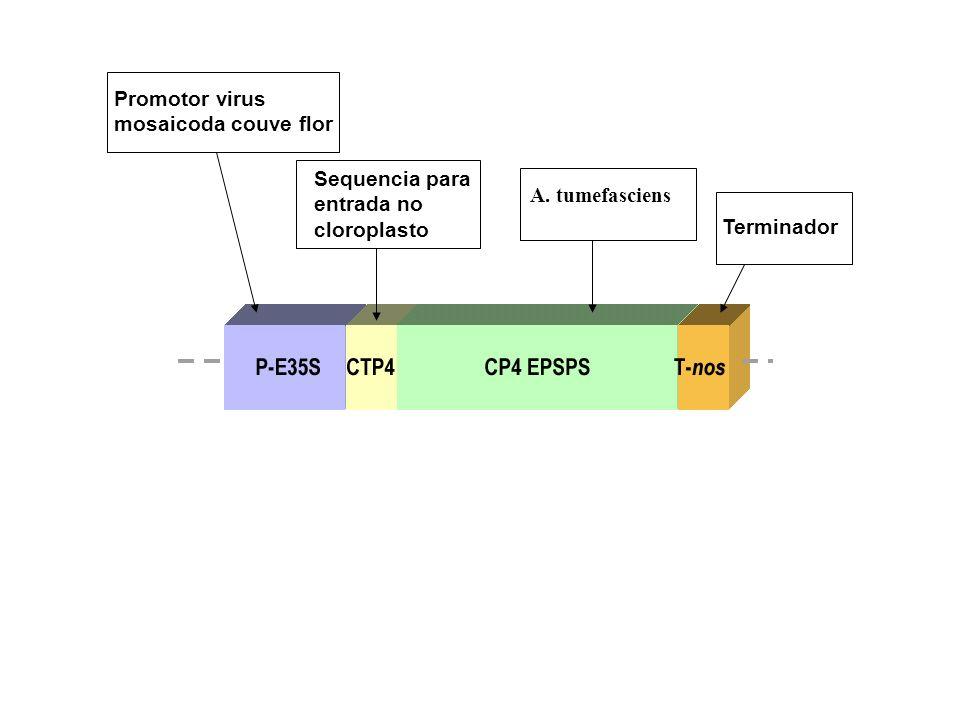 Promotor virus mosaicoda couve flor Sequencia para entrada no cloroplasto Terminador A. tumefasciens