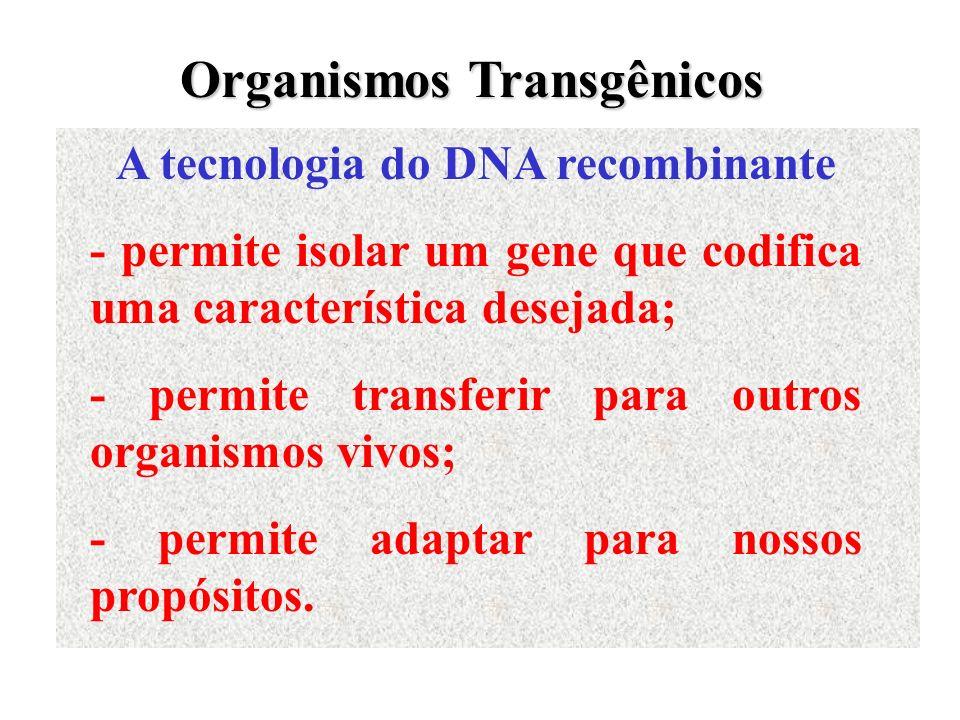 A tecnologia do DNA recombinante - permite isolar um gene que codifica uma característica desejada; - permite transferir para outros organismos vivos;
