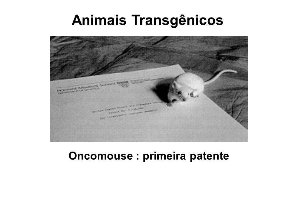 Animais Transgênicos Oncomouse : primeira patente