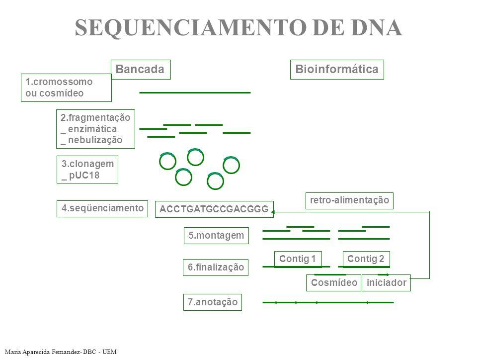 1.cromossomo ou cosmídeo 2.fragmentação _ enzimática _ nebulização 3.clonagem _ pUC18 ACCTGATGCCGACGGG 4.seqüenciamento 5.montagem 6.finalização Contig 1Contig 2 Cosmídeoiniciador 7.anotação retro-alimentação BancadaBioinformática SEQUENCIAMENTO DE DNA