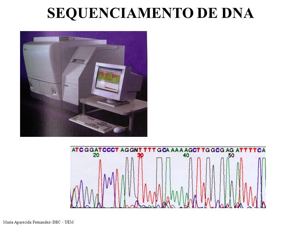 Maria Aparecida Fernandez- DBC - UEM SEQUENCIAMENTO DE DNA