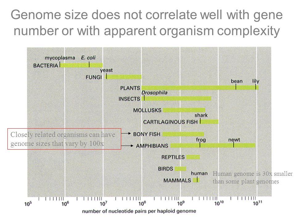 N= ln (1-P) ln (1 - f ) Tamanho do fragmento clonado (pb) Tamanho do genoma (pb) 2 X10 6 Bacteria 2 X10 7 Fungo 3 X10 9 mamíferos 5 X10 3 10 X10 3 20 X10 3 40 X10 3 400 200 100 50 4.000 2.000 1.000 500 600.000 300.000 150.000 75.000 Número de clones teoricamente necessários para representar o genoma
