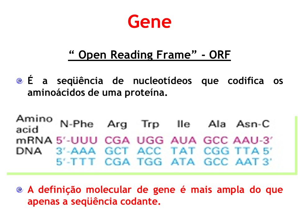Open Reading Frame - ORF É a seqüência de nucleotídeos que codifica os aminoácidos de uma proteína.