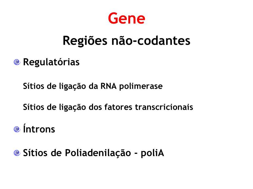 Regulatórias Sítios de ligação da RNA polimerase Sítios de ligação dos fatores transcricionais Íntrons Sítios de Poliadenilação - poliA Gene Regiões não-codantes