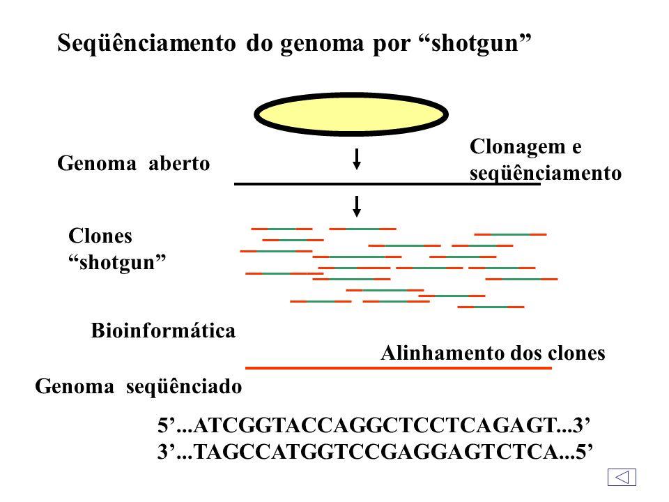 Alguns genomas são constituídos de RNA e não de DNA.