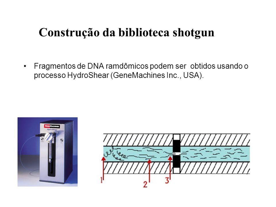Fragmentos de DNA ramdômicos podem ser obtidos usando o processo HydroShear (GeneMachines Inc., USA).