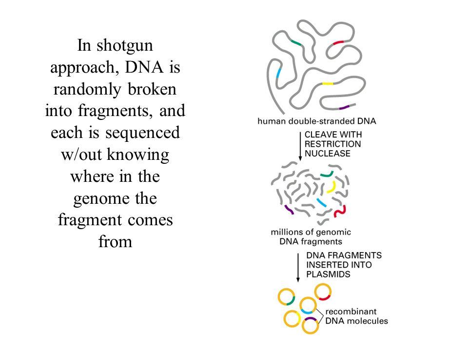Band pattern of human chromosomes
