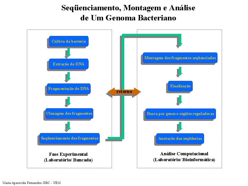 Genes in genome