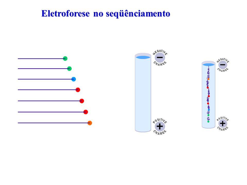 Eletroforese no seqüênciamento