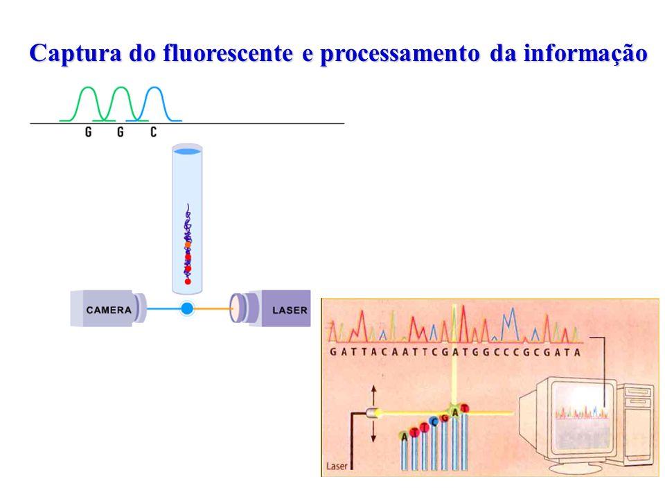 Captura do fluorescente e processamento da informação