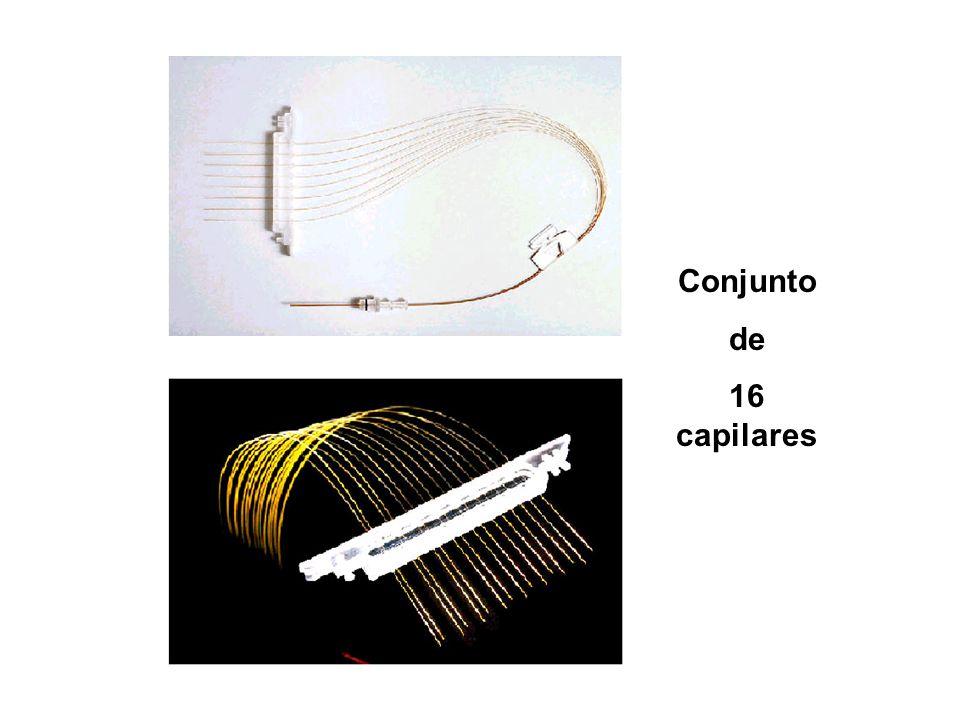 Conjunto de 16 capilares