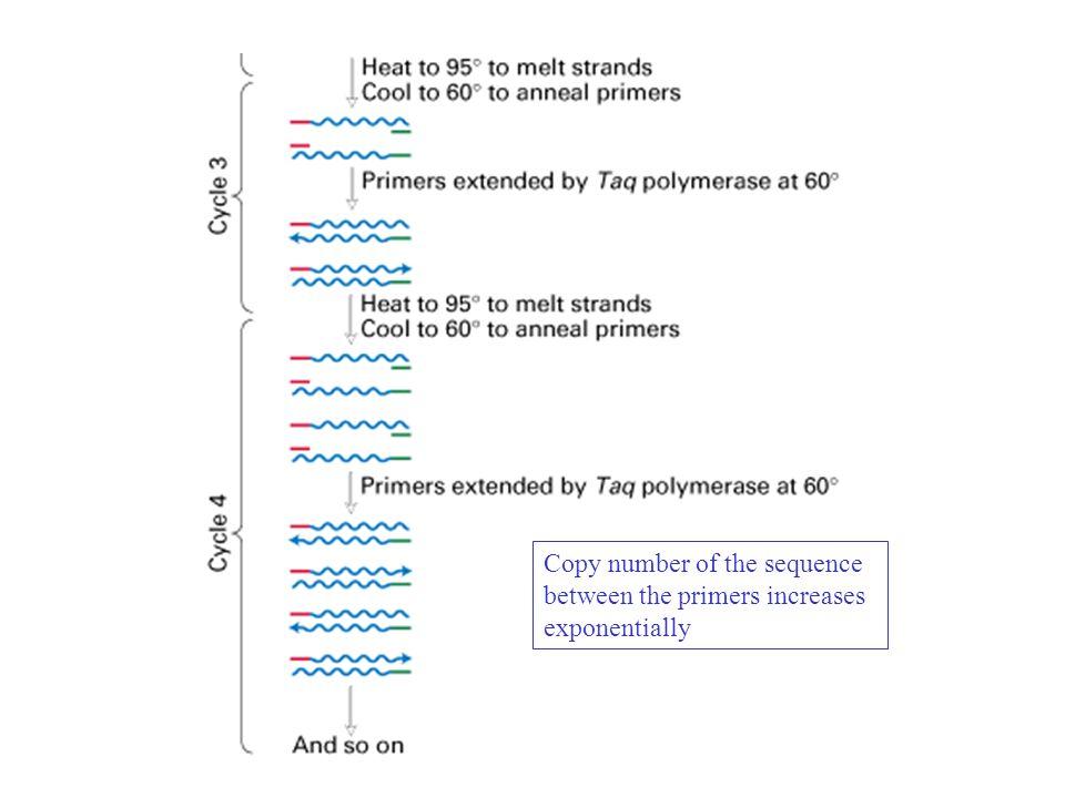 SEQUENCIAMENTO DE DNA Profa.Dra.