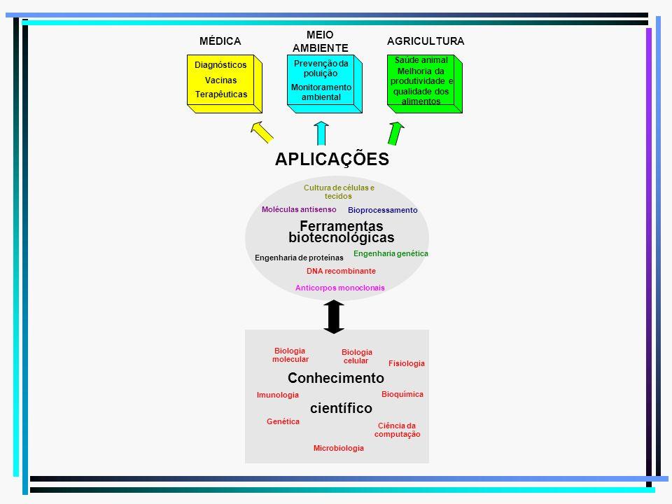 MÉDICA MEIO AMBIENTE AGRICULTURA APLICAÇÕES Ferramentas biotecnológicas Conhecimento científico Biologia molecular Biologia celular Fisiologia Bioquím