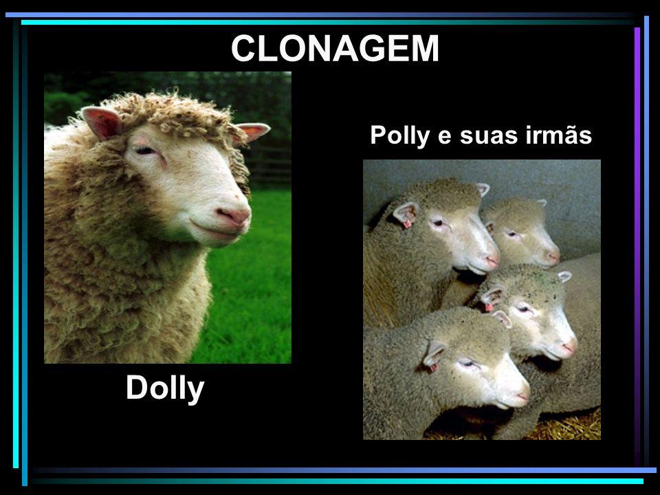CLONAGEM Dolly Polly e suas irmãs