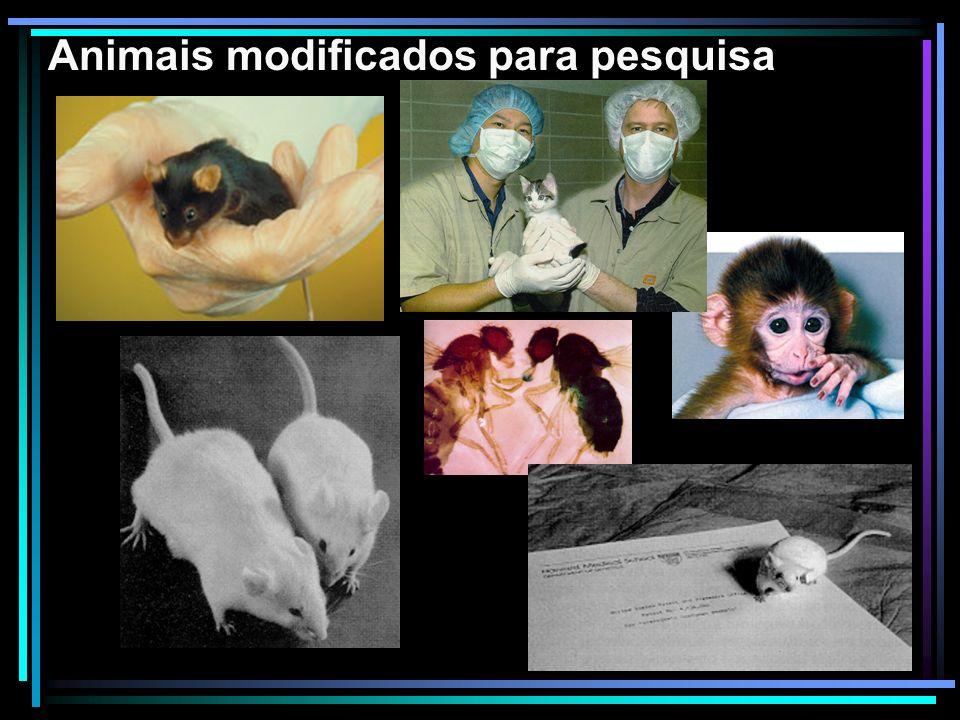 Animais modificados para pesquisa