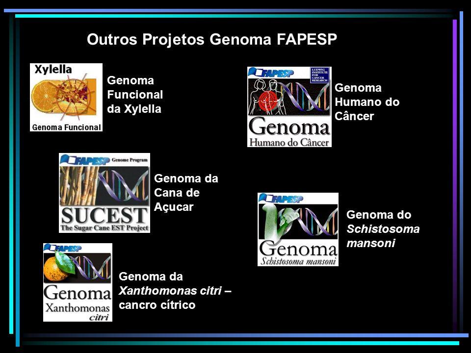 Outros Projetos Genoma FAPESP Genoma Funcional da Xylella Genoma da Cana de Açucar Genoma da Xanthomonas citri – cancro cítrico Genoma Humano do Cânce