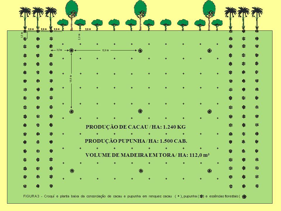 VOLUME DE MADEIRA EM TORA / HA: 112,0 m³ PRODUÇÃO DE CACAU / HA: 1.240 KG PRODUÇÃO PUPUNHA / HA: 1.500 CAB.