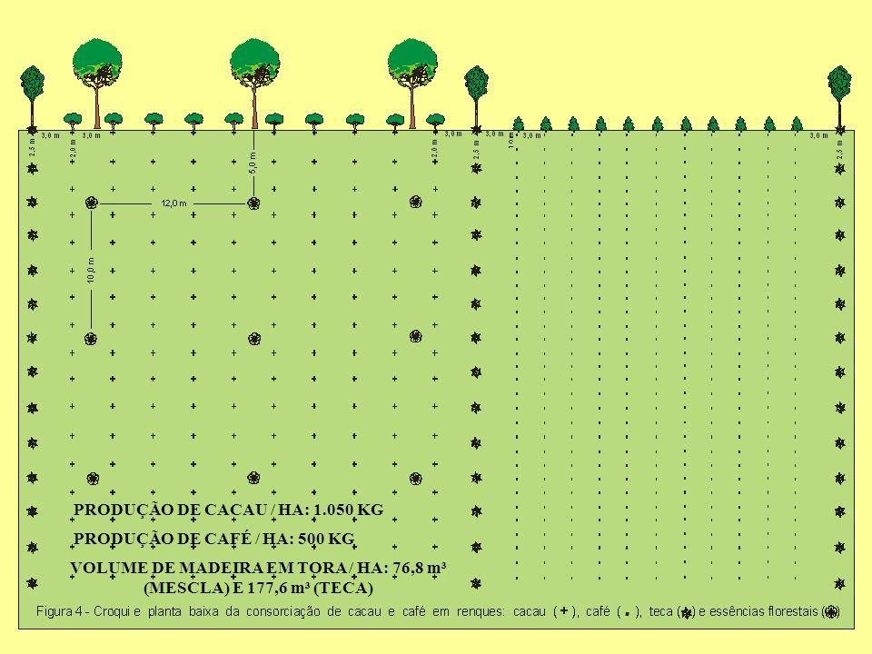 VOLUME DE MADEIRA EM TORA / HA: 76,8 m³ (MESCLA) E 177,6 m³ (TECA) PRODUÇÃO DE CACAU / HA: 1.050 KG PRODUÇÃO DE CAFÉ / HA: 500 KG
