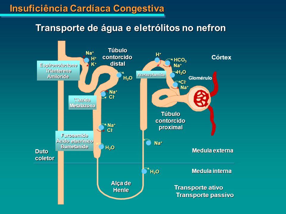 Insuficiência Cardíaca Congestiva Glomérulo Córtex H+H+H+H+ HCO 3 Na + H2OH2OH2OH2O Cl - Acetazolamida Túbulocontorcidoproximal Na + H2OH2OH2OH2O Cl -