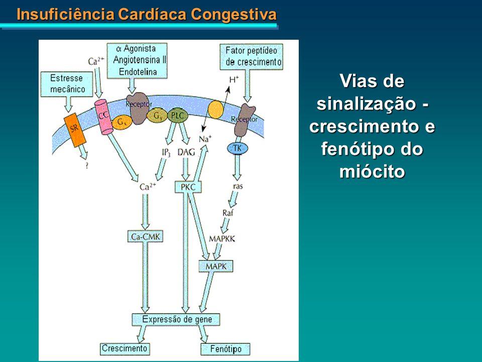 Insuficiência Cardíaca Congestiva Vias de sinalização - crescimento e fenótipo do miócito