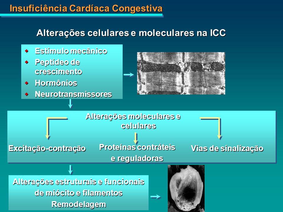Insuficiência Cardíaca Congestiva Alterações celulares e moleculares na ICC Estímulo mecânico Estímulo mecânico Peptídeo de crescimento Peptídeo de cr