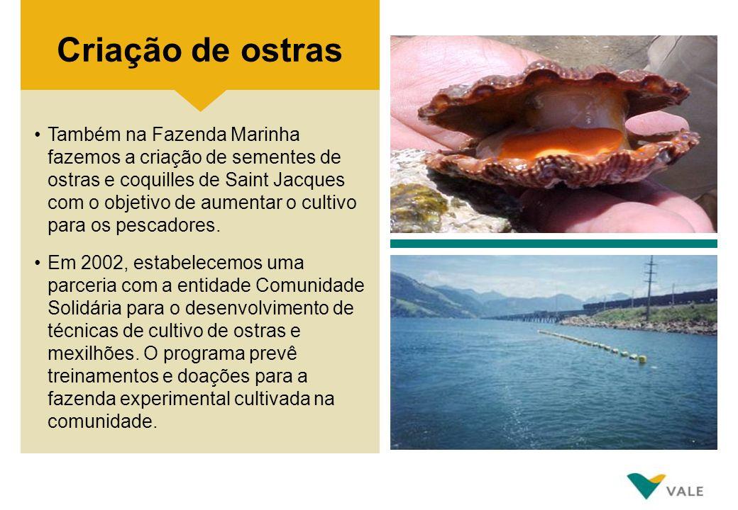 Também na Fazenda Marinha fazemos a criação de sementes de ostras e coquilles de Saint Jacques com o objetivo de aumentar o cultivo para os pescadores
