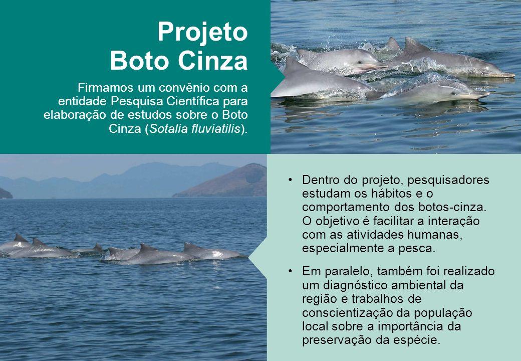 Projeto Boto Cinza Firmamos um convênio com a entidade Pesquisa Científica para elaboração de estudos sobre o Boto Cinza (Sotalia fluviatilis). Dentro