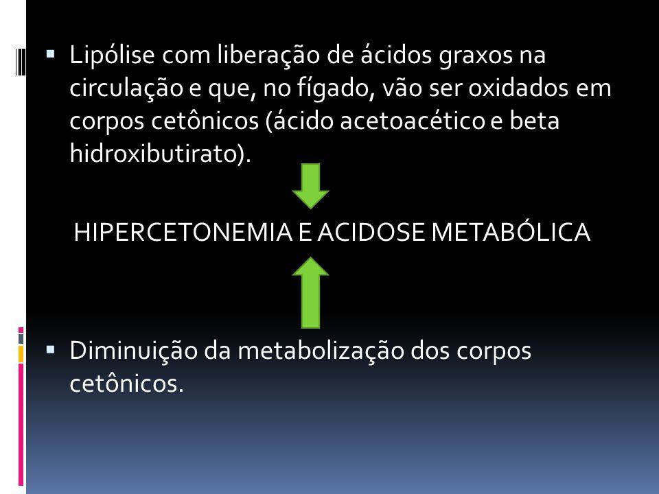  Lipólise com liberação de ácidos graxos na circulação e que, no fígado, vão ser oxidados em corpos cetônicos (ácido acetoacético e beta hidroxibutir