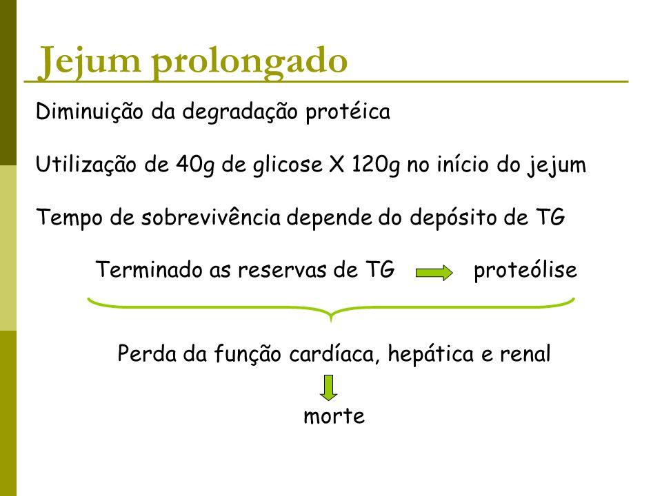 Jejum prolongado Diminuição da degradação protéica Utilização de 40g de glicose X 120g no início do jejum Tempo de sobrevivência depende do depósito d