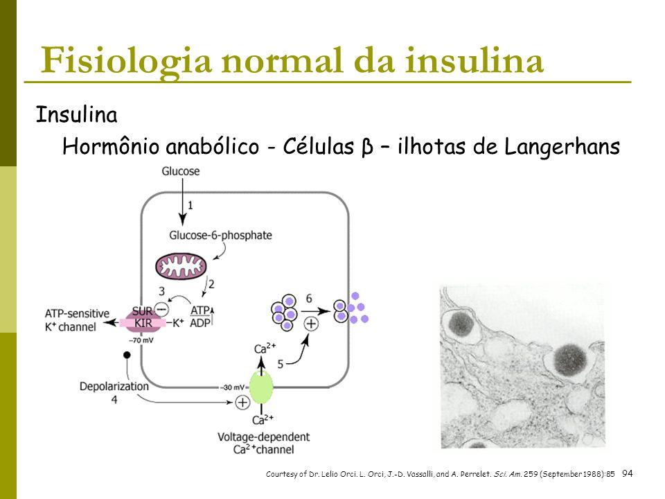 Insulina Hormônio anabólico - Células β – ilhotas de Langerhans Courtesy of Dr. Lelio Orci. L. Orci, J.-D. Vassalli, and A. Perrelet. Sci. Am. 259 (Se