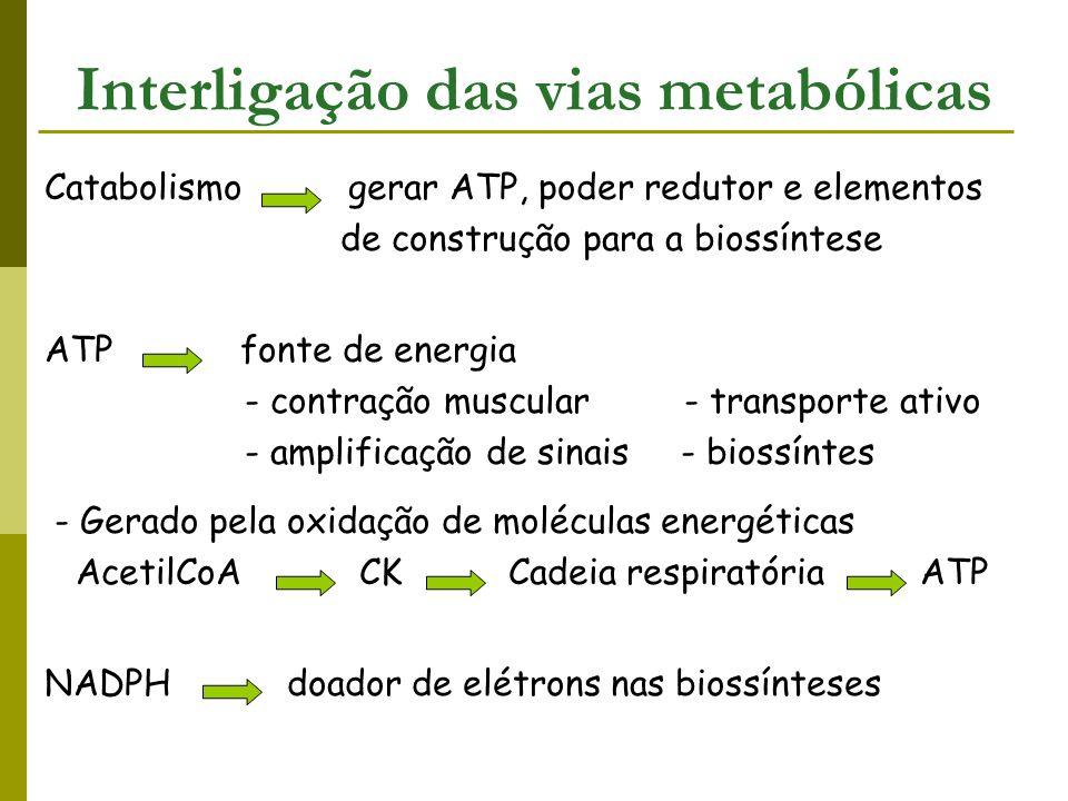 AcetilCoA unidade fundamental para a síntese de biomoléculas - intermediário comum na degradação da maioria dos alimentos Vias de biossíntese X vias de degradação Ácidos graxos biossíntese  degradação Glicose glicólise  gliconeogênese Vias diferentes eficácia do controle metabólico Interligação das vias metabólicas
