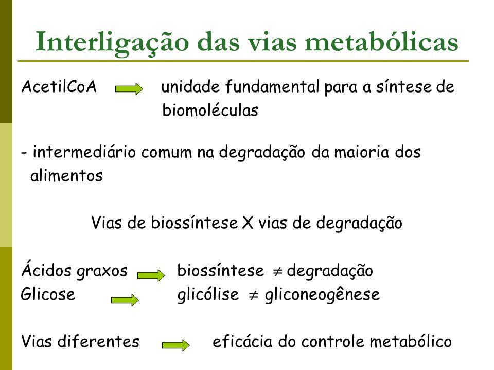 Anabolismo e Catabolismo coordenados com precisão (Stryer, 2004; Pamela, 1996) Regulação metabólica 1 - Ativação e inibição alostérica - reações limitantes da velocidade 2 – Modificação covalente de enzimas - adição ou remoção de grupos fosfatos 3 – Níveis enzimáticos - quantidade e atividade controladas 4 – Compartimentação - destino das moléculas depende de estarem no citossol ou mitocôndria 5 – Especialização metabólica dos órgãos