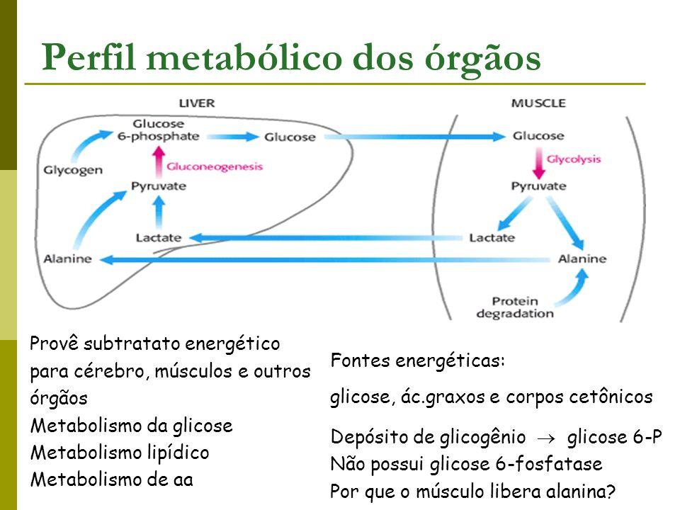 Fontes energéticas: glicose, ác.graxos e corpos cetônicos Depósito de glicogênio  glicose 6-P Não possui glicose 6-fosfatase Por que o músculo libera
