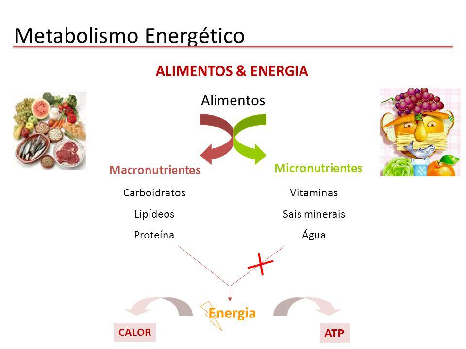 núcleo AMPAMPc β2β2 Receptores Adrenérgicos PKA Fosforilase b Fosforilase a glicogênio Adrenalina Catecolaminas ↑ glicogenólise e a gliconeogênese Metabolismo de carboidratos no fígado
