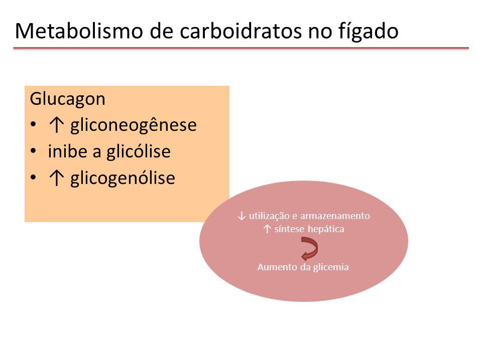 Glucagon ↑ gliconeogênese inibe a glicólise ↑ glicogenólise Metabolismo de carboidratos no fígado ↓ utilização e armazenamento ↑ síntese hepática Aume