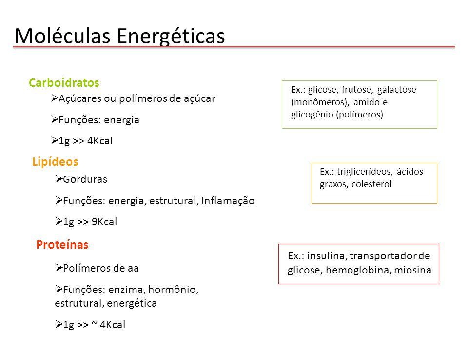 Metabolismo Energético Carboidratos complexos Manoses Lipídios complexos Proteínas Ácidos Graxos Aminoácidos Catabolismo: reações de hidrólise e oxidação MOLÉCULA + O2 CO2 + H20 Anabolismo: reações de condensação