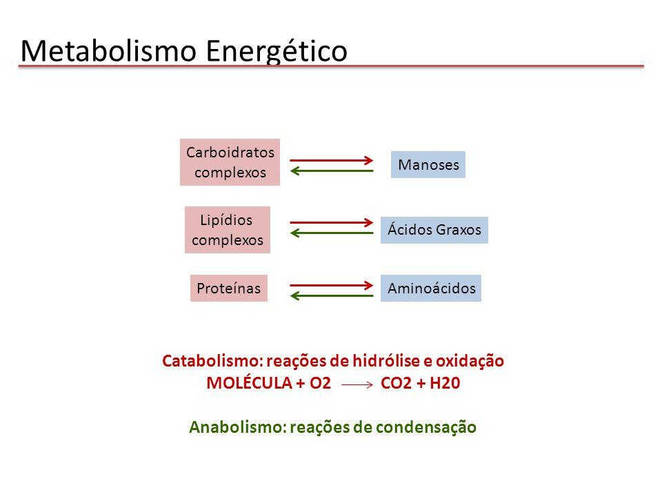 Produção de energia: Glicose Glicose Glicose 6P Frutose 6P Frutose 1,6-bifosfato Dihidroxiacetona P Gliceraldeído 3P 1,3-bifosfoglicerato 3 fosfoglicerato2 fosfogliceratofosfoenolpiruvato piruvato ATP 2 NADH 2 ATP 2 H2O