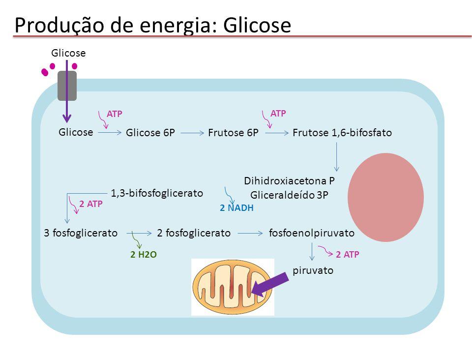 Produção de energia: Glicose piruvato Acetil CoA piruvato 2 NADH 2 CO 2 Oxaloacetato Citrato Ciclo do ácido cítrico 4 CO 2 6 NADH 2 FADH 2 2 ATP H2O Percurso final comum