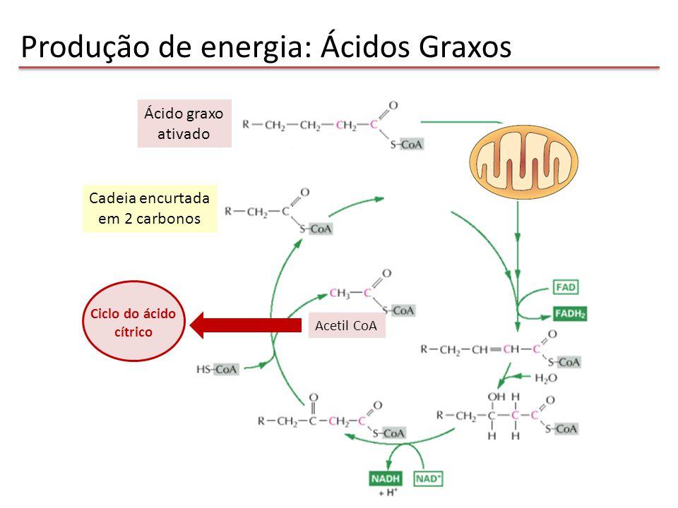 Controle do Metabolismo Energético Fornecimento, armazenamento e utilização de substratos energéticos em diferentes situações fisiológicas Glicose AGL Consumidor de substratos Fonte de AA