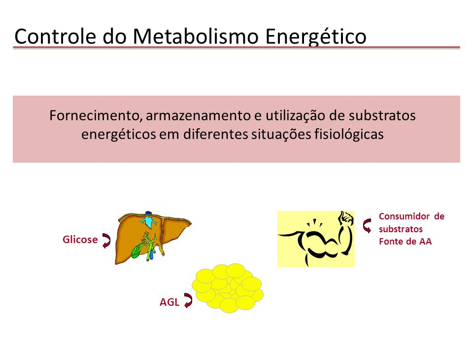 Insulina: ↑Glicogênio ↑Oxidação da glicose: lactato ↑Captação de aa: síntese protéica Catecolaminas: ↑ Glicogenólise ↓ Degradação de PTN Glicocorticóides: ↑ Degradação de PTN Metabolismo de carboidratos e proteínas no músculo