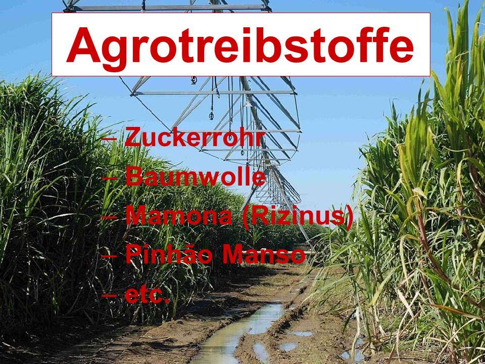 Agrotreibstoffe – Zuckerrohr – Baumwolle – Mamona (Rizinus) – Pinhão Manso – etc.