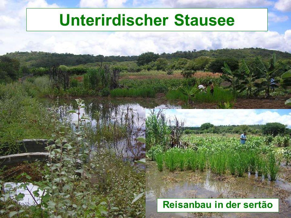 Reisanbau in der sertão Unterirdischer Stausee