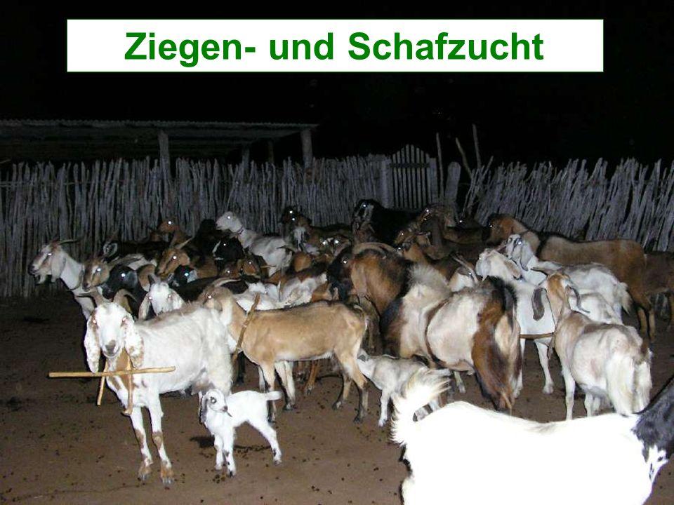 Ziegen- und Schafzucht